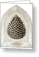 Pinecone Greeting Card by Charles Harden