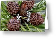 Pinecone Rock 1 Greeting Card