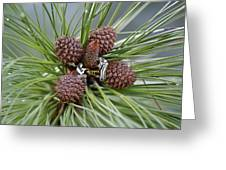 Pinecone Tull Greeting Card