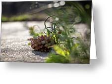 Pinecones And Wild Onions  Greeting Card