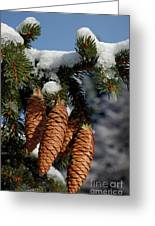 Pinecones Hanging From A Snow-covered Fir Tree Branch Greeting Card
