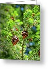 Pinecones Greeting Card