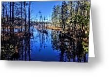 Pinelands Greeting Card