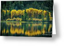 Pines And Aspens Greeting Card