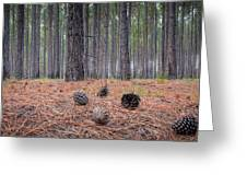 Pines And Needles 4 Greeting Card