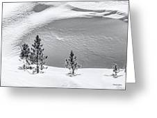 Pines In Snow Drifts Black And White Greeting Card