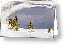 Pines In The Snow Drifts Greeting Card