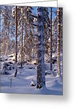 Pines Greeting Card