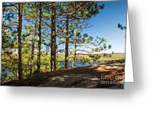Pines On Sunny Cliff Greeting Card
