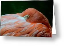 Pink 1 C Greeting Card