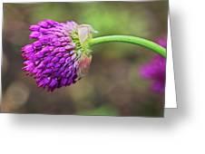 Pink Allium Greeting Card
