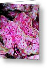Pink Caladium Greeting Card