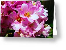 Pink And Beauty Greeting Card