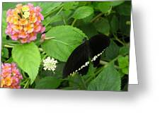 Pink And Black In The Garden Greeting Card