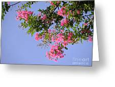 Pink And Blue Canopy Greeting Card