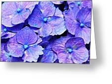 Pink And Blue Hydrangea 4 Greeting Card