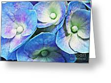 Pink And Blue Hydrangea 5 Greeting Card