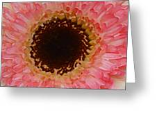 Pink And Brown Gerber Center Greeting Card
