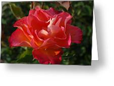Pink And Gold Rose Greeting Card