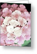 Pink And Green Blossoms Greeting Card