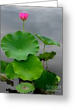 Pink And Green On Grey Greeting Card