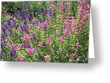 Pink And Lavender Greeting Card