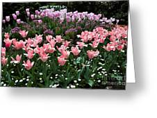 Pink And Mauve Tulips Greeting Card