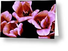 Pink And Orange Tulips Greeting Card