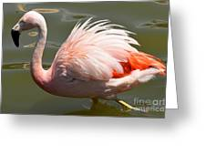 Pink And Proud Greeting Card