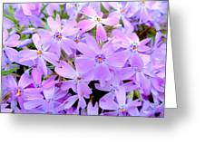 Pink And Purple Spring Greeting Card