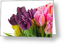 Pink And Violet  Tulips Greeting Card