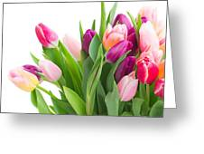 Pink And Violet Tulips Bouquet  Greeting Card