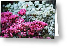 Pink And White Azelas Greeting Card
