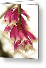 Pink And White Bells Greeting Card