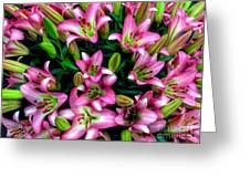 Pink And White Lilies Greeting Card