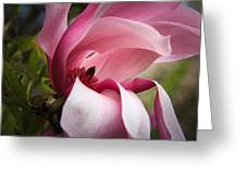 Pink And White Magnolia Greeting Card