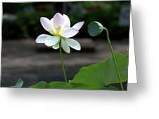 Pink And White Water Lily With Green Pod Greeting Card