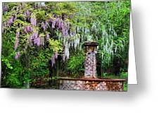 Pink And White Wisterias Greeting Card