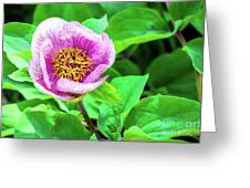 Pink And Yellow Flower Greeting Card