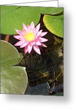Pink And Yellow Lotus Flower Greeting Card
