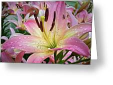 Pink And Yellow Mountain Lily Greeting Card