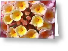 Pink And Yellows Greeting Card