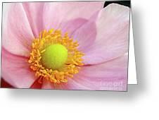 Pink Anemone Greeting Card