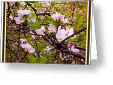 Pink Aplle Blossoms Of Spring Time Greeting Card
