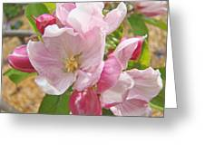 Pink Apple Blossoms Art Prints Spring Trees Baslee Troutman Greeting Card
