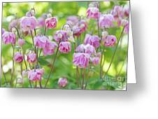 Pink Aquilegia Flowers Greeting Card