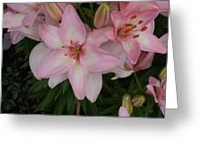 Pink Asiatic Lilies 1 Greeting Card