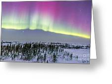 Pink Aurora Over Boreal Forest Greeting Card