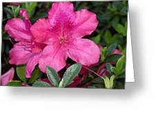 Pink Azaela Greeting Card