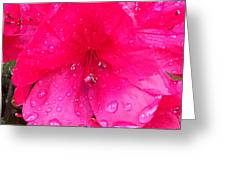 Pink Azalea After Spring Rain Greeting Card
